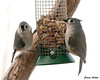 "<div class=""jaDesc""> <h4> Tufted Titmouse Pair on Peanut Feeder</h4> <p></p> </div>"