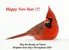 "<div class=""jaDesc""> <h4>Male Cardinal in Frigid Snow Storm - February, 2007</h4> <p></p> </div>"