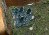 "<div class=""jaDesc""> <h4> 5 Chickadee ""Chicklets"" - 10 Days Old - June 27, 2006</h4> </div>"