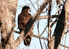 "<div class=""jaDesc""> <h4> Immature Bald Eagle Resting - January 29, 2012 </h4> <p> This was the second immature Bald Eagle that we saw perched in a tree by the side of the road along the Cannonsville Reservoir. </p> </div>"