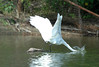 "<div class=""jaDesc""> <h4> Great Egret Strikes Again - August 2006 </h4> </div>"