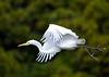 "<div class=""jaDesc""> <h4> Great Egret Airborne - December 16, 2014 </h4> <p> </p> </div>"