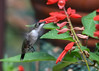 "<div class=""jaDesc""> <h4>Female Hummingbird Beak Inside Flower - September 9, 2016 </h4> <p> This flower must have been extra tasty as she buried her beak all the way in.</p> </div>"