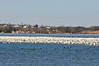 "<div class=""jaDesc""> <h4> Enormous Raft of Snow Geese - March 31, 2014 - Video Attached</h4> <p> On my day long trip around Cayuga Lake today, I had the delight of seeing an enormous raft of Snow Geese resting on a large patch of ice.  The band of Geese stretched for more than a mile.  My estimate is at least 100,000 Geese, but that might be a bit high.  There were also thousands of ducks in the water in the foreground.   Migration is in full swing! </p>  </div> <center> <a href=""http://www.youtube.com/watch?v=PDItXCjpSPs""  style=""color: #0000FF"" class=""lightbox""><strong> Play Video</strong></a>"