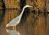 "<div class=""jaDesc""> <h4>Great Blue Heron Hunting - November 6, 2013 - Video Attached</h4> <p> This Great Blue Heron was looking for an afternoon snack at Bombay Hook NWR in Delaware.  </p>  </div> <center> <a href=""http://www.youtube.com/watch?v=3IYzpdRiOKQ""  style=""color: #0000FF"" class=""lightbox""><strong> Play Video</strong></a>"