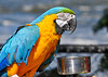"<div class=""jaDesc""> <h4> Jewel Enjoying a Snack - September 20, 2013 </h4> <p>Macaw named Jewel takes a break to have lunch.</p> </div>"