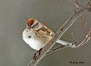 """<div class=""""jaDesc""""> <h4>Tree Sparrow in Sunset Light - January 18, 2009 </h4> <p>  This Tree Sparrow perched on his favorite approach branch while the sun was setting.  The sunset light really highlighted his colors.</p> </div>"""