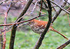 "<div class=""jaDesc""> <h4>Brown Thrasher In Winterberry Bush - April 26, 2020</h4> <p></p> </div>"