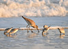"<div class=""jaDesc""> <h4>Willet Probing Sand - November 10, 2016 </h4> <p>There must be something to eat that has been exposed in the sand by the rushing water.</p> </div>"