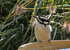 "<div class=""jaDesc""> <h4> Female Hairy Woodpecker Getting Drink - October 12, 2010 - Video Attached </h4> <p> The woodpeckers do not normally stop at the birdbath. This female Hairy was very thirsty - she stopped several times to get a drink.</p> </div> </br> <center> <a href=""http://www.youtube.com/watch?v=PvyUEs6-KZE"" class=""lightbox""><img src=""http://d577165.u292.s-gohost.net/images/stories/video_thumb.jpg"" alt=""""/></a> </center>"