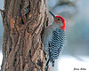 """<div class=""""jaDesc""""> <h4> Red-bellied WP Having Breakfast - January 31, 2010 - Video Attached </h4> <p>On a bitter cold morning today (-3 F), the male Red-bellied Woodpecker was in early getting his breakfast of homemade suet.</p> </div> </br> <center> <a href=""""http://www.youtube.com/watch?v=QicODEOoCEI """" class=""""lightbox""""><img src=""""http://d577165.u292.s-gohost.net/images/stories/video_thumb.jpg"""" alt=""""""""/></a> </center>"""