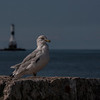 The Bird and the Lighthouse