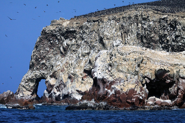 Peruvian Booby and Guanay Cormorants - among the guano-encrusted rock, sea-arch and cave, and naked sky - late spring season at Islas Ballestas.