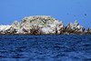 From the blue Pacific waters, to the guano-coated rock and marine birds abound - Islas Ballestas.