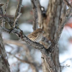 Sparrow 9366 Sq LOGO