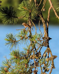 Sparrow 0506 8x10 b LOGO