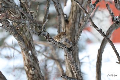 Sparrow 9366 LOGO