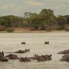 Hippo Raft