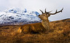 A Beautiful Stag.