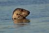 Common Seal. John Chapman.
