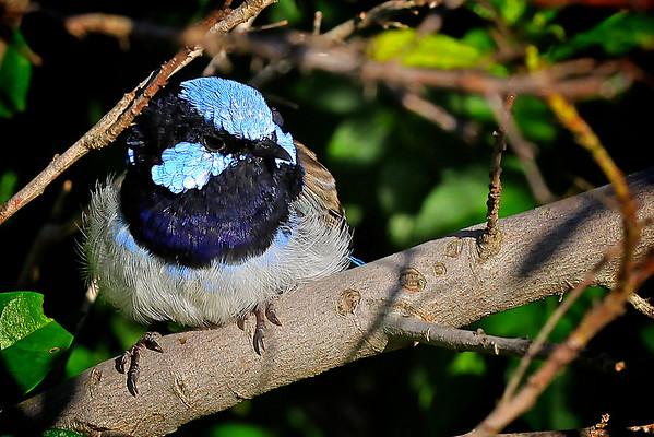 Birds - Flights of fancy...