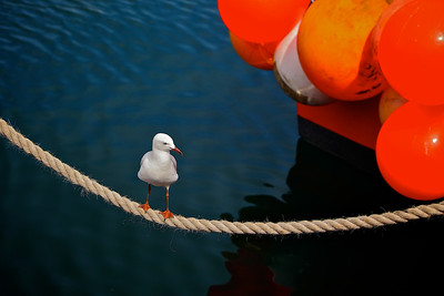 A seagull on a fishing boat rope