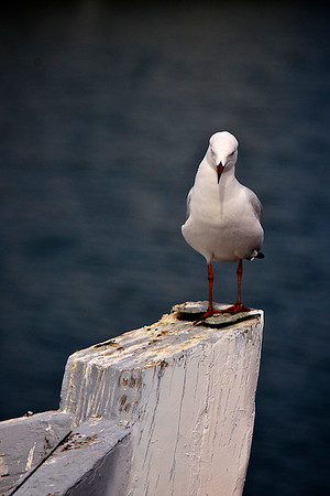 White seagull on an old boat bow