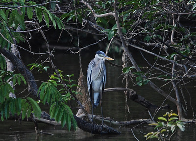 Heron, Guyana, South America