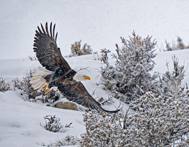 Flying in a Snowstorm
