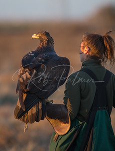 Falconer and her Eagle