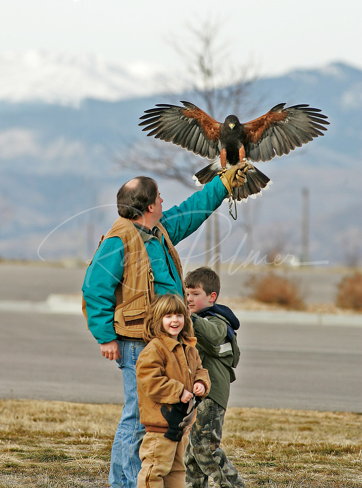 Falconer with family and a male Harris's Hawk