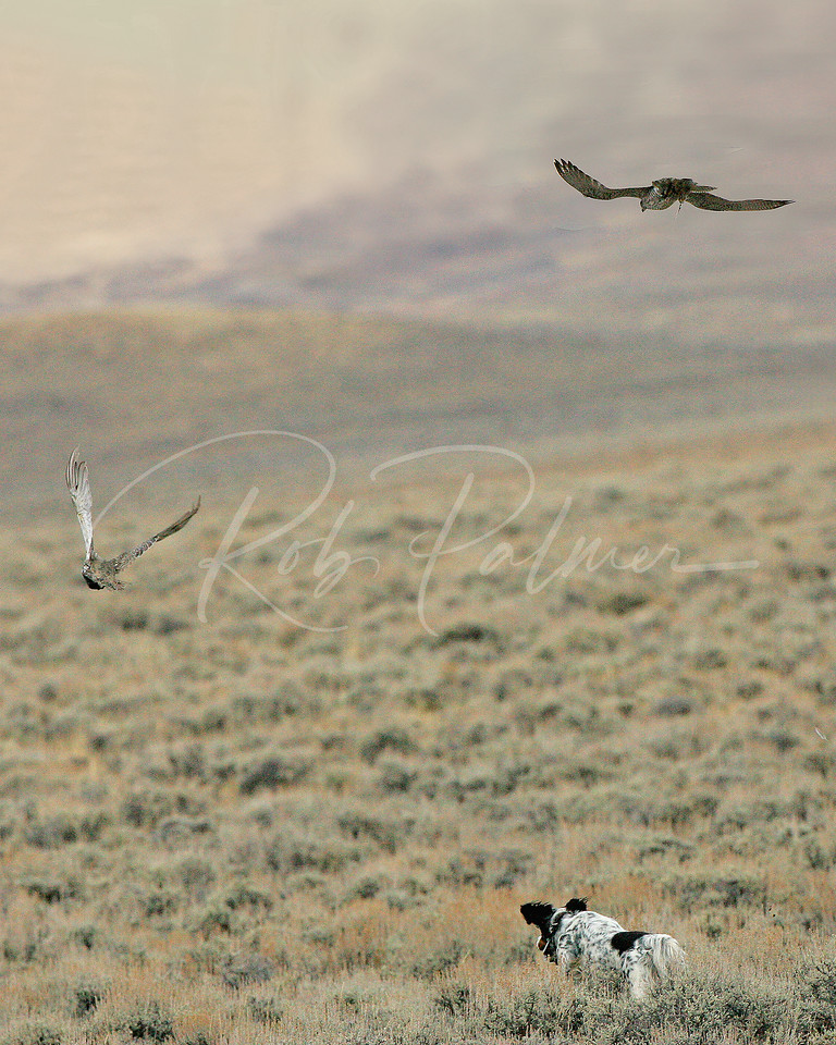 The Falcon, the grouse and the dog