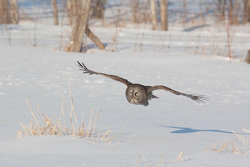 Pictures of Wild Birds of Prey.