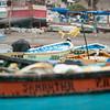 Puscana Harbor & Belcher's Gull