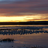 Snow Geese At Sunrise #1<br /> 0720757
