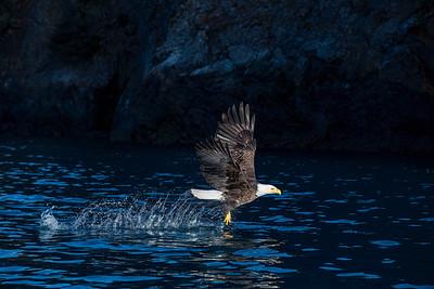 Bald Eagle 20200316 0771