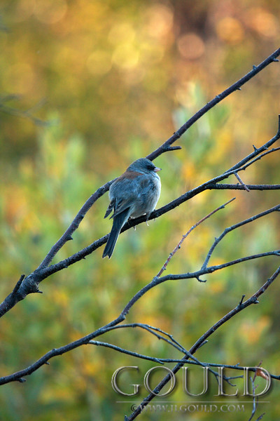 Bird In The Fall Morn<br /> Colorado