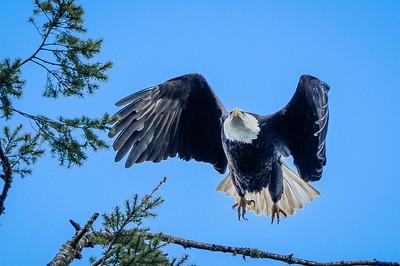 Hover Eagle