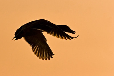 on the wing    8351