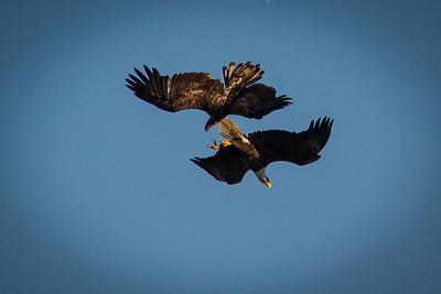 Eagles 1403-2376