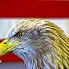 The Patriotic Eagle