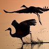 Sunset Sandhill Cranes