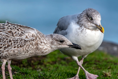 Coastal birds posing pretty