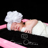Ortman Photography-4