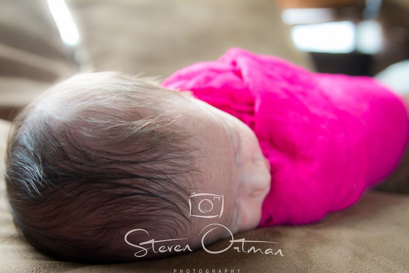 Ortman Photography