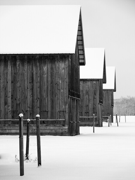 Tobacco barns in winter, Connecticut