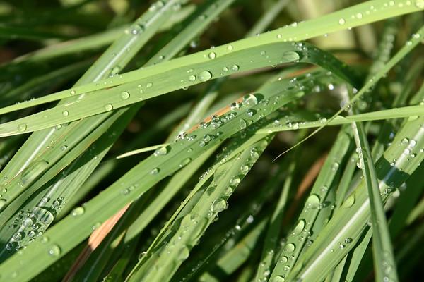 A fresh dew on a sunny day.
