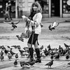 Amongst the Pigeons