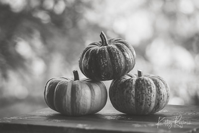 Pumpkins In Trio