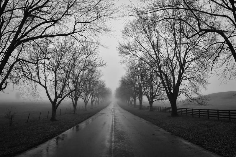 """""""Fog On The Farm"""""""